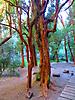 22 - Arrayan Forest, Bariloche