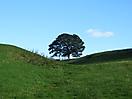 18 - Famous Tree, Hadrian's Wall