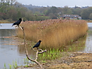35 - Cardigan Wildlife Reserve