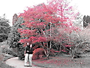 42 - Bath Botanical Gardens