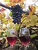 18 - Grape Cider, Pelequen