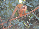 3 - Squirrel Monkey, Parque Nacional Manuel Antonio