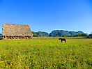 11 - Tobacco Plantations, Viñales National Park
