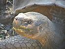 4 - Giant Tortoises, Santa Cruz, Galapagos