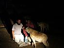 11 - Sal Feeding Hyenas, Harar