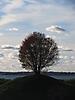 3 - Tree at Suomenlinna Island, Helsinki