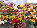 29 - Flower Arrangements while WWOOFing in Inchigeelagh