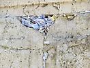6 - Paper Prayers on the Western Wall, Jerusalem