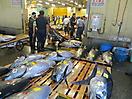 12 - Tuna Auction at Tsukiji Fish Market, Tokyo