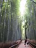 35 - Arashiyama Bamboo Grove, Kyoto