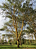 2 - Beautiful Trees, Lake Naivasha