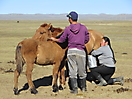 14 - Milking Horses in Central Mongolia
