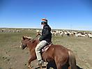 16 - Rounding up the Livestock, Kharkhorin
