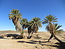 20 - Sahara Oasis