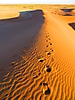 24 - Footsteps in the Sahara Dunes