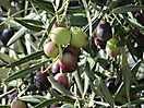 4 - Olives, Chefchaouen