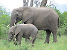 44 - Mom and Baby Elephant, Kruger National Park