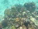 11 - Mnemba Coral, Zanzibar Archipelago
