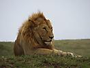 30 - Lion, Serengeti National Park