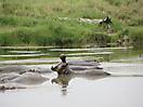 31 - Hippotamus, Serengeti National Park
