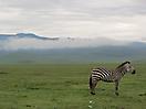 41 - Zebra, Ngorongoro Conservation Area