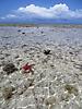 7 - Nungwi Beach at Low Tide, Zanzibar