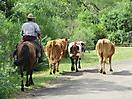 12 - Uruguayan Gaucho, Valle Eden